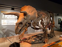Smithsonian National Museum of Natural History (Stabbur's Master) Tags: smithsonianmuseumofnaturalhistory washingtondc districtofcolumbia thedistrict dinosaur triceratops museum museumexhibit
