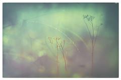Brousaille.. (chana4 ( Nancy Charlton)) Tags: nature bokeh exterieur superposition brousaille couleur vintage