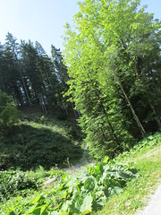 Various plants (HUNstarsky28) Tags: slovenia nature woods forest green tour water rocky mountains hills
