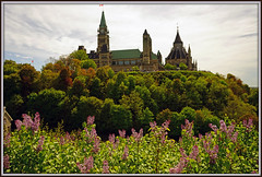 d (40) (Martin Stringer) Tags: ottawa ontario beauty flowers floral tulips tulipfestival scenics landscapes
