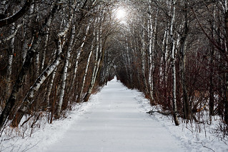 Cold Path through the Woods