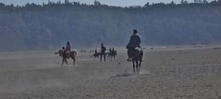 INDONESIEN, Java, Pferde und Reiter in der Caldera (Salndmeer) am Bromo, 17498/10074