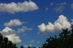 Texas Afternoon Cumulus (austexican718) Tags: cloud sky blue treeline texas cumulus centraltexas hillcountry