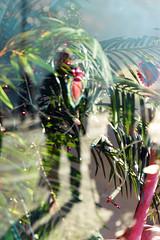 Tropical Swiss Winter (Bephep2010) Tags: 2682118 70200mm 77 alpha fenster picz reflektion schweiz sony switzerland winter zurich zürich meetup reflection tropical tropisch window ch