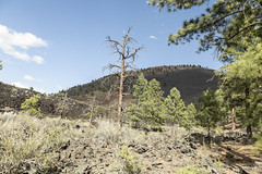 SedonaVacation_May2018-3238 (RobBixbyPhotography) Tags: arizona flagstaff sedona sunsetcrater vacation nationalmonument volcano travel
