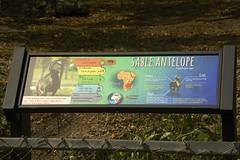 signage (ucumari photography) Tags: ucumariphotography sableantelope animal mammal zoomiami miami fl florida march 2018 dsc3633 hippotragusniger