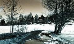 Combloux 02 2018026 (Patrick.Raymond (4M views)) Tags: alpes haute savoie megeve comloux montagne neige froid gel bois arbre foret argentique nikon lomography turquoise