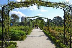 La Rosaleda (conall..) Tags: el parque de retiro del buen elparquedeelretiro parquedelbuenretiro rosaleda rosegarden