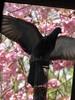 The Idiot. (_Abi_) Tags: uk birds feral pigeon feeder lol facepalm moment idiot british wildlife