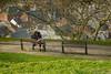 Les amoureux des bancs publics (Georges Brassens) (musette thierry) Tags: amour thierry musette d800 photographie photo namur citadelle 28300mm nikon scéne scénes georgesbrassens