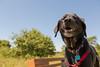 Cortana at Trempealeau (Tony Webster) Tags: cortana trempealeau trempealeaunationalwildliferefuge wisconsin nationalwildliferefuge wildliferefuge