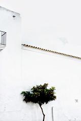 Carrer de sa Cala. Sant Joan de Labritjia. Ibiza. Spain. (COLINA PACO) Tags: ibiza eivissa islasbaleares santjosepdesatalaia spain spagna españa espagne franciscocolina minimal níspero medlar néflier nespola