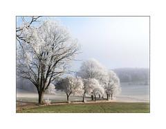 Raureif (ernst.koeppel) Tags: baum trees allee reif raureif frost snow natur nature landscape landschaft bayern bavaria frankonia oberfranken kalt cold
