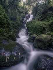 Henry's Reserve Waterfall (hakannedjat) Tags: waterfall nzwaterfalls falls newzealand nz nzmustdo nzmustsee sony sonynz sonya7rii a7rii zeiss