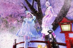 Under cherry blossoms 03 (fuji.SL.JP) Tags: scondlife sl kawaii girl japan japanese cherryblossoms maid oni konpeitou