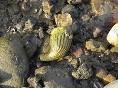 Mudlarking (Broomwicks) Tags: mudlarking treasure hunting river stream mud history archaeology old artefacts