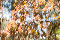 Intentional Camera Movement (Sara@Shotley) Tags: icm abstract canon trees windy nature