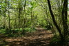 Through the Forest (JamieHaugh) Tags: clevedon northsomerset england uk gb greatbritain outdoors sony a6000 color colour trees forest woods woodland funnel green pathway tunnel nature route peaceful silence sunshine quiet spring nortons ilce6000 zeiss