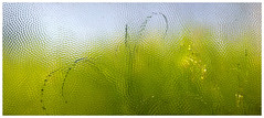 Spring outside a basement window (michaelwalker19) Tags: green window ethereal distorted