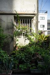 街 (fumi*23) Tags: ilce7rm3 sony a7r3 35mm sonnartfe35mmf28za sel35f28z plant alley kagoshima street green 路地 鹿児島 植物 sonnar zeiss