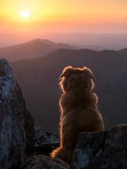 Sunset Dog (www.jkm-photographie.com) Tags: photographestrasbourg manfrotto pro jkmphotographie em1 zuiko julienkam mefoto omd micro43 olympus lowepro mkii em5 paysbasque sunset coucherdesoleil dog chien