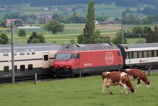 SBB Lokomotive Re 460 006 - 0 mit Taufname Lavaux ( Hersteller SLM Nr. 5409 - ABB - Inbetriebname 1992 - Elektrolokomotive Triebfahrzeug ) unterwegs zwischen Gümligen und Rubigen im Kanton Bern der Schweiz