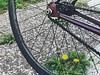 5:16:2018 (uki_cafe) Tags: japan hokkaido spring nature iphone iphonex grass bicycle fixedbike fixedgear fuji feather