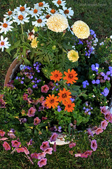 SPLASH (Day Night Tripper) Tags: flowers gardens plants fruits vegetables vases pottery bouquet