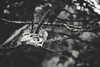 Hold on, down and down, we're going to the bone (.KiLTRo.) Tags: freire regióndelaaraucanía chile cl kiltro bone skull cráneo tree nature bw blackandwhite monochrome pitrufquén lichen branch hang árbol madera macro macrofotografía animal forest wood