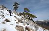 Diagonal (Begoña Fernández) Tags: lasagra lasvíboras granada andalucía pinua pino pine pin pinus elurra nieve snow neige mendizalea montañero hiker randonneur primavera spring udaberria printemps