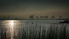 surrounded by silhouettes - Umringt von Silhouetten (ralfkai41) Tags: nebel see reflection outdoor lake natur bäume trees silhouetten silhouettes water usedom island nepperminersee reflektion wasser insel spiegelung ngc