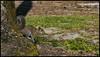 _SG_2018_04_0103_IMG_6872 (_SG_) Tags: usa us florida key west sunshine state united states america island city roundtrip edison ford winter estates historical museum botanical garden thomas alva henry fort meyers caloosahatchee river