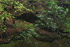 Secret hollow (baro-nite) Tags: centralnorthcarolina dukeforest hollowrock newhopecreek wildflowers rhododendron beech fagus pentax k1 mirex tiltshift smcpentaxa64512855mm iridientdeveloper affinityphoto