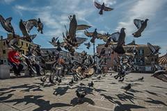 Italien - Chioggia - Tauben (1) (Pana53) Tags: photographedbypana53 pana53 italien italia mittelmeer chioggia stadt häuser platz gebäude tauben tiere vögel himmel lichtschatten transparenz wolken nikon nikond810 vogel reisefotografie