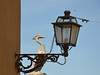 The Order of the Phoenix (Colombaie) Tags: tuscia alto lazio provincia viterbo viterbese gita ponte 1maggio tuscania ibis statua muro lanterna lampione guardare