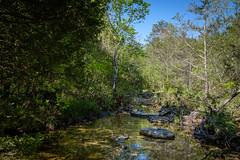 'Cab Creek' (Gary Allman) Tags: fujifilmxe3 backpacking gsa herculesgladewilderness hammockcamping peeshollowtrail bradleyville missouri unitedstates us