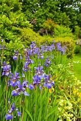 Garden @ Bell House (Adam Swaine) Tags: gardens bellhouse iris flora flowers dulwich naturelovers nature england english britain british seasons spring uk ukcounties beautiful petals canon