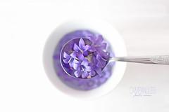 Campanules (Chocolatine photos) Tags: fleurs violet photo photographesamateursdumonde pdc pastel flickr fleur flowers makemesmile minimaliste nikon nature