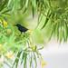 Some insanely black bird
