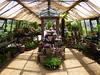 In the Greenhouse (Gilder Kate) Tags: petershamnurseries petersham teahouse geraniums geranium glasshouse pottedplants panasoniclumixdmctz70 panasoniclumix panasonic lumix dmctz70 tz70 richmond