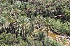 Palmeraie (Sush DG) Tags: palmier palmerai valley vallée paradis paradise eau water maroc morocco imouzere vacance holliday nature natural