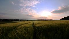 sunset at cornfield (Nicky Hauptmen) Tags: sunset sky clouds cornfield nature landscape light sonnenuntergang kornfeld natur wolken himmel wind