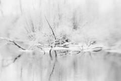 "Snowy River (dreamscapesxx) Tags: ""barrytonmi"" ""chippewariver"" ""downedtree"" ""bytheriver"" winter frozen snowy ""blackandwhite"" ""lightroomapp"" canoneos80d lensbabyoriginal"