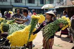 708-Mya-MANDALAY-0865.jpg (stefan m. prager) Tags: asien myanmar blume markt mandalay mandalayregion myanmarbirma mm