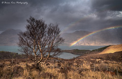 Torridon Rainbow (.Brian Kerr Photography.) Tags: scotland scottishlandscapes scottish scottishhighlands scotspirit scottishlandscape sony landscapephotography photography mountains torridon lochtorridon briankerrphotography briankerrphoto rainbow photo photographer outdoor outdoorphotography opoty visitscotland visitbritain nature naturallandscape natural vanguarduk formatthitech firecrest formatthitechdiscountcodebrian10 tree a7rii availablelight grass landscape sky mountain field