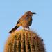 The Night Owl & The Early Bird