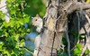 Watching You, Watching Me....... (law_keven) Tags: wildlifephotography wildlife photography england london catford animals squirrel squirrels