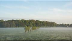 Het Ter Coulster bos