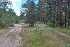 Волинський ліс Лісова дорога InterNetri Ukraine 0251828400