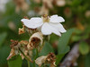 White Flower Blossom. (dccradio) Tags: lumberton nc northcarolina robesoncounty outdoors outside nature blossom bloom plant greenery leaf leaves foliage bokeh flower floral flowers flowering nikond40 dslr branch